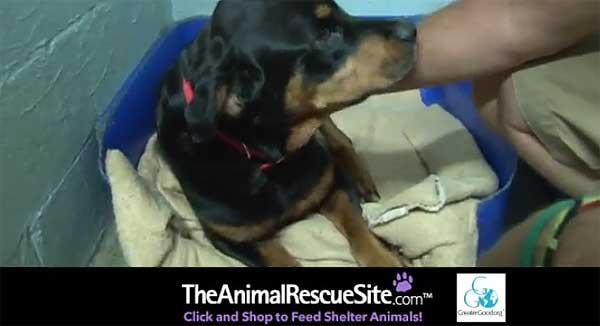 ¿Qué ha sido de los perros afectados y perdidos durante el Huracán Sandy? (vídeo).