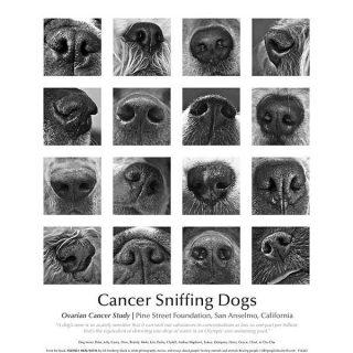 ¿Podrán los perros detectar cáncer de ovario en el aire del aliento?. Un nuevo estudio de Pine Street Foundation busca respuestas.