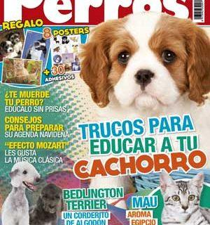 """Revista Perros y Compañía, diciembre de 2012: bedlington terrier, en etología """"perros miedicas, cómo vitar que sufran"""", problemas de adaptación en los perros, cachorros mordedores..."""
