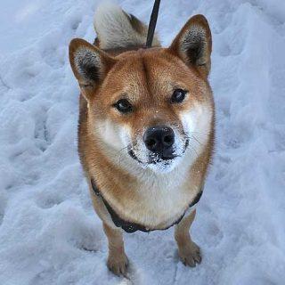 Los perros pueden elegir entre la calidad de los refuerzos según sus preferencias particulares... y pueden esperar minutos para conseguirlos.