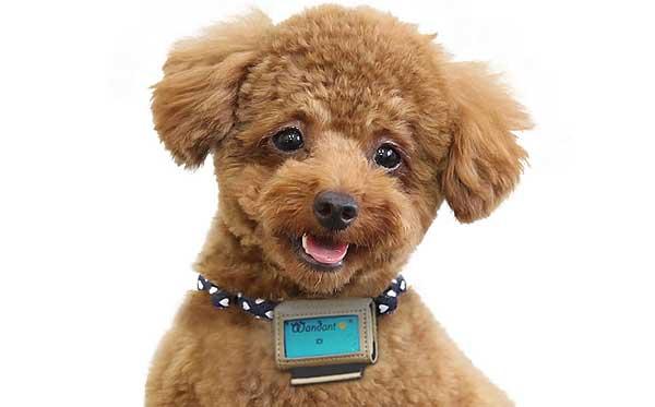 Wandant es un dispositivo que acaba de lanzar al mercado japonés la multinacional Fujitsu. Se trata de un pequeño podómetros de sólo 16 gramos de peso que se acopla al collar del perro.