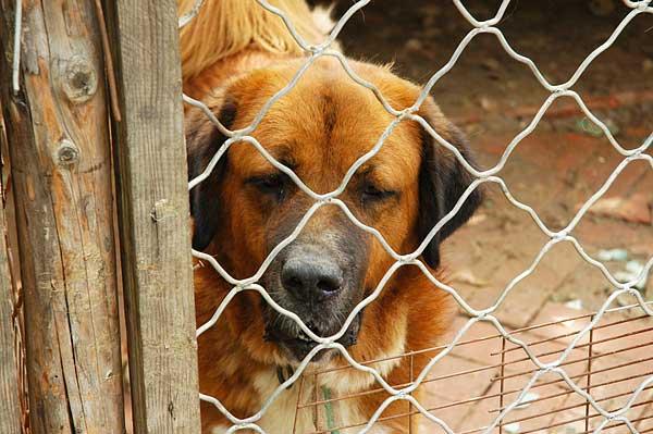 La adopción es la salida para muchos perros, pero por desgracia algunos son devueltos... ¿Por qué se devuelven los perros adoptados?