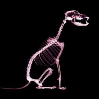 5 Errores nutricionales, y fatales, en el perro con problemas ortopédicos, por Carlos A. Gutiérrez (veterinario especialista en nutrición canina).