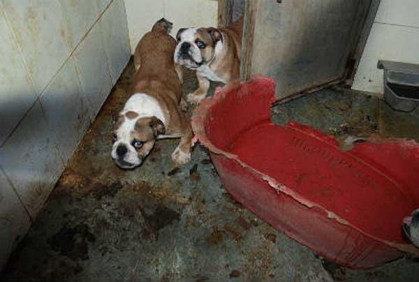 El Refugio denuncia la existencia de criaderos ilegales de perros en España