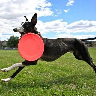 Récord del mundo de frisbee (122,53 metros de distancia). Vídeo de Davy Whippet.