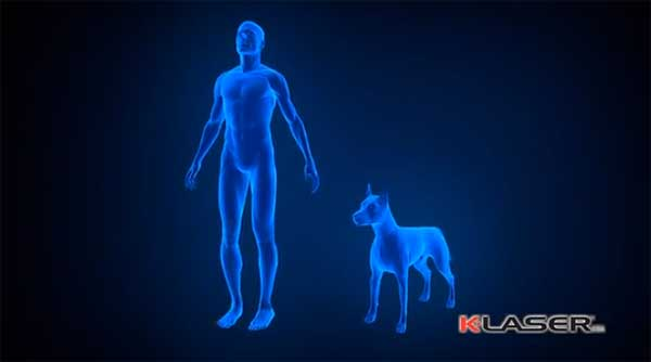 Tratamiento láser para perros. ¿Cuándo es útil y recomendable el láser en los perros?