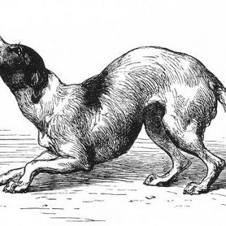 Si todos entendíéramos el lenguaje de los perros se podrían evitar la mayoría de las mordeduras (vídeo).