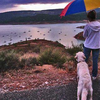 El humano alfa Vs. el perro doméstico. ¿Somos buenos líderes para nuestros perros? Las 10 cualidades del líder.