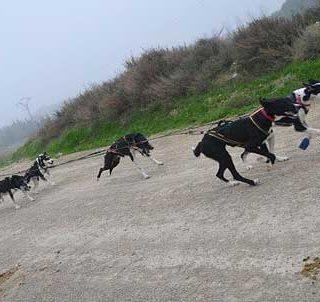 Travesía de Los Monegros con Perros de Tiro, prueba reina del mushing media distancia, el próximo fin de semana.
