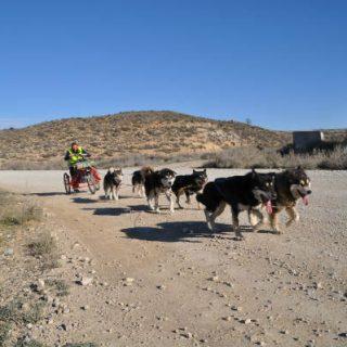 Travesía de Los Monegros con Perros, primera y segunda etapa.