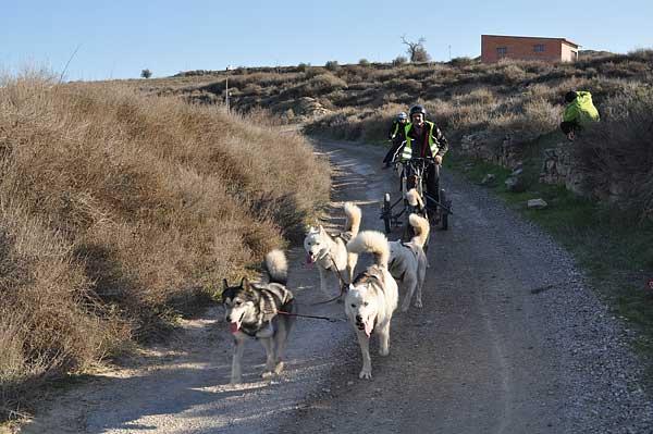 La XXI Travesía de Los Monegros ha acabado hoy tras cuatro días, cinco etapas y 120 kilómetros de mushing.
