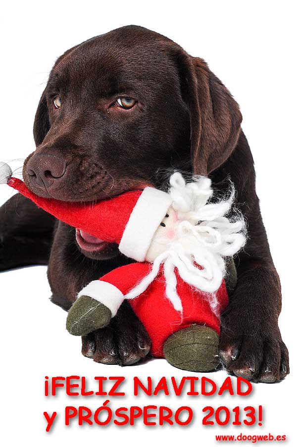 Desde doogweb te queremos desear una feliz Navidad y un próspero año 2013. ¡Gracias por estar ahí!