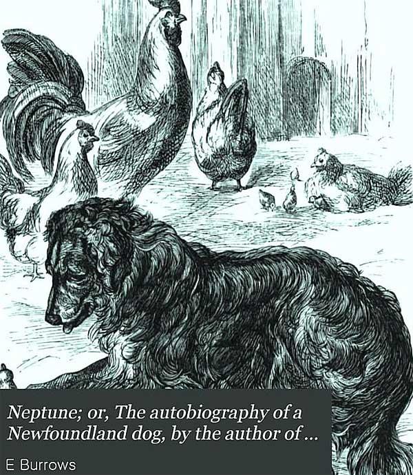 Neptuno, autobiografía de un perro terranova. Libro gratis.