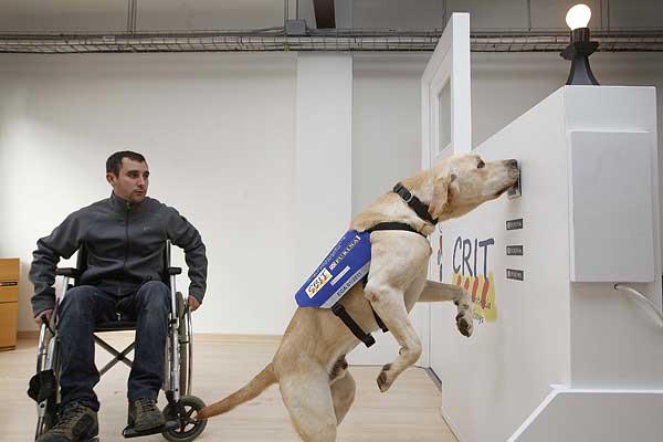 """Nestlé Purina y Fundación Adecco presentan el proyecto """"Solos no, juntos"""" para formar a personas con discapacidad, será desarrollado por la Associació CRIT – Gossos d'assistència de Catalunya."""