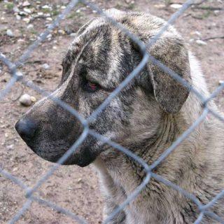 Las bases del concurso de la perrera provincial de Cuenca, consideran la gestión de la perrera como un contrato de obras publicas o suministros.