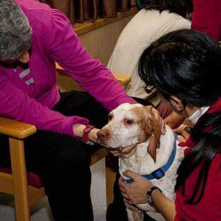 Los perros de la Protectora de Alcoy felicitan la Navidad a los residentes del centro de Gormaget.