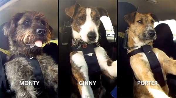 El vídeo de los perros conduciendo ha dado la vuelta al mundo. Parece la última chorrada de Internet... ¿o tal vez no lo sea?