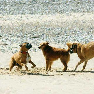 """Los estudiosos del Laboratorio Horowitz de Cognición Canina (sí, """"Horowitz"""" es el apellido de Alexandra horowitz, autora de """"En la mente de un perro"""") quieren profundizar en esos momentos de juego... que no dejan de ser intercambios de información inter-especies."""