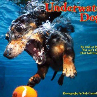 """¿Recuerdas la serie de fotos """"Underwater dogs"""" de Seth Casteel? Pues hay calendario 2013 con más imágenes impactantes."""