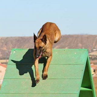 Agility con Club de Agility La Selva y Mi perro 10.