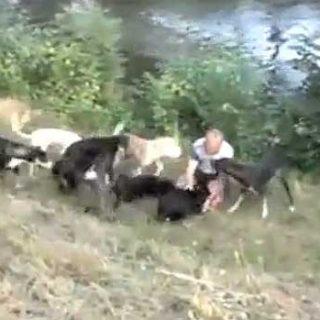 El líder de la manada... pero de verdad. Heini Winter entrenando (vídeo).