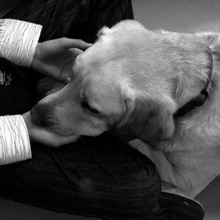 Clever Dog Lab, buceando en la inteligencia del perro.