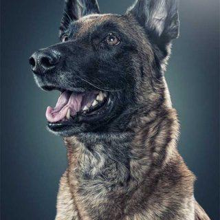 Fotos de perros de Daniel Sadlowski, los mejores retratos perrunos.