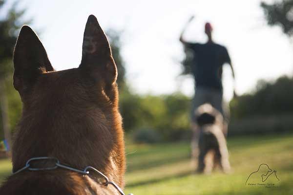 "Natural Training Manuel Pacheco y Hobby Dog, BCN 2032. ""Genio se nace... y a imbécil se llega""."