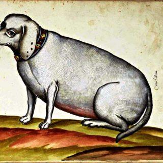 Obesidad canina... Cuando algo falla en el metabolismo.