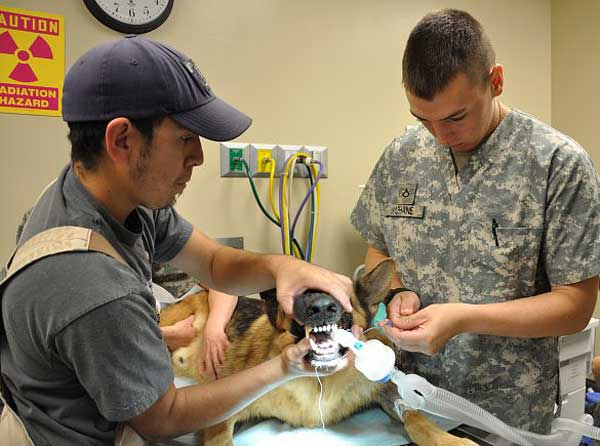 Primer hospital veterinario para perros militares en Afganistán.