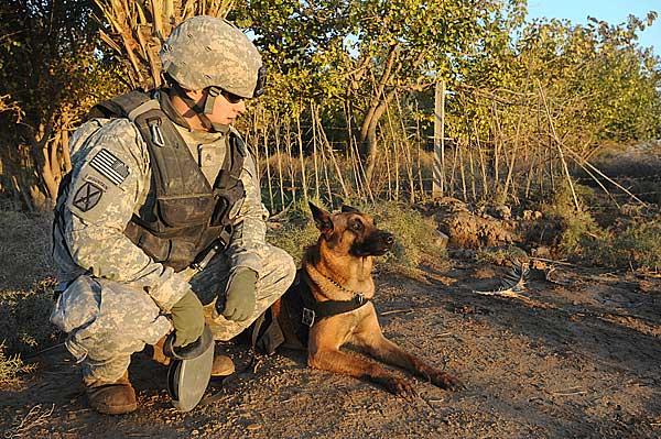 FIDOS Project, selección de perros militares casi ciencia ficción.