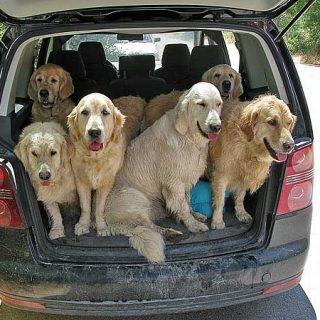 Viajando en coche con los perros... ¿cuándo nos pueden multar?