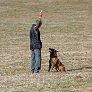 El Pistage francés es una disciplina monográfica de rastro, que tiene como objetivo resaltar las cualidades olfativas del perro.