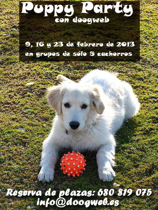 Clases de cachorros (Puppy Parties), muy pronto con doogweb. ¿Quieres participar con nosotros?