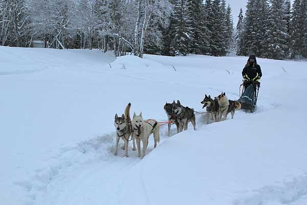 Amundsen Race, 300 kilómetros de mushing y un equipo español para contárnoslo.