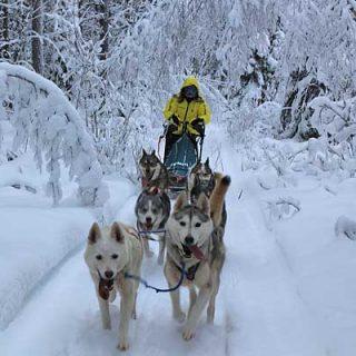 Amundsen Race, todo preparado para la carrera de mushing de referencia en Europa.