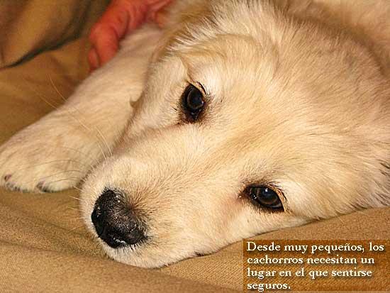 El miedo a los ruidos en los perros tiene relación con la raza, la edad y el origen del perro.