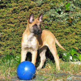 El ejercicio en los cachorros... mejor en su justa medida. Vídeo de propiocepción en cachorros.