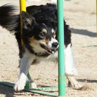 Estiramientos y masajes en los perros (vídeo).