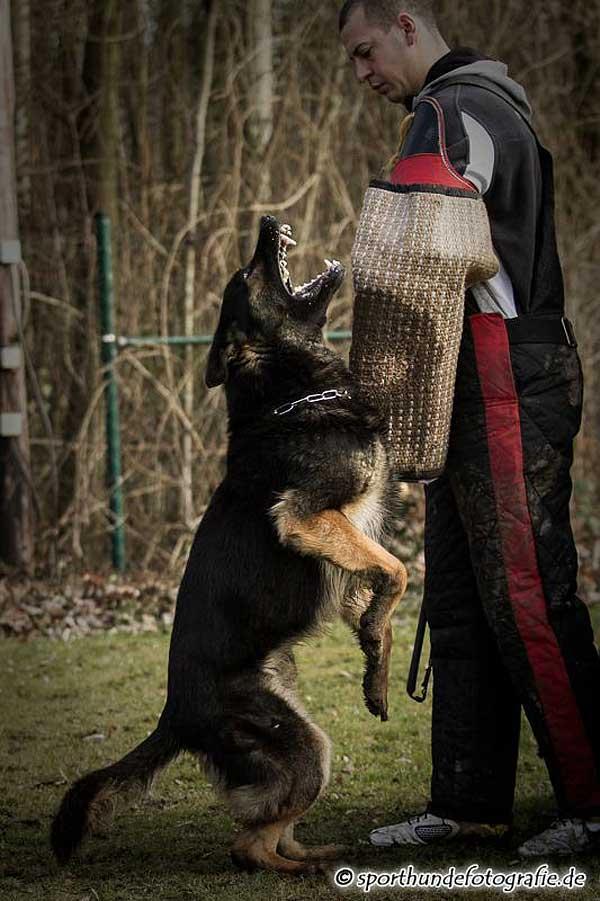 Nico Mayer es un fotógrafo alemán especializado en deporte con perros. Fotos impactantes.