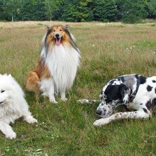 Perros con diabetes se pueden curar. Lo han conseguido en la UAB.