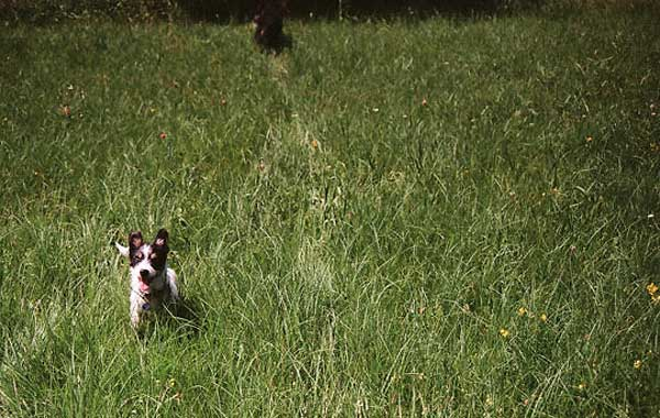 5 (+1) peligros de la primavera para los perros.