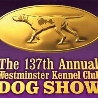 Westminster Kennel Club 2013, llega la 137 edición de una de las exposiciones más ¿prestigiosas?