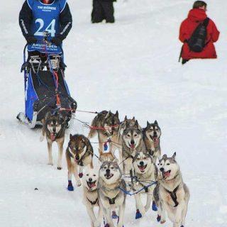 """Amundsen Race contada en primera persona. """"La noche es amiga de los huskys""""."""