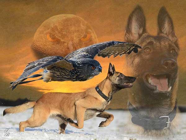 Espectaculares fotografías y collages de perros, de la mano de Tanja Brant.