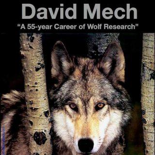 """""""55 años de Carrera en la Investigación del #Lobo"""", seminario de David Mech en Bilbao."""