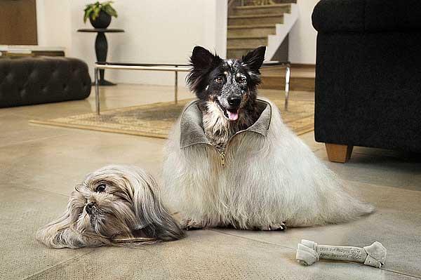 """""""No pongas el pedigrí por encima del perro"""", fotografía de Jamie Toh."""
