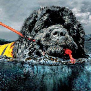 V Curso de Rescate acuático canino, en Denia, con el Grupo de Rescate Mare Nostrum.