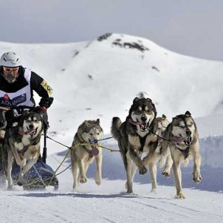 Los mejores mushers españoles se citan en Baqueira Beret en el Campeonato de España de Mushing Nieve.