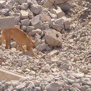 Normativa Oficial e Internacional Rescate Canino Método Arcón: Rigor y Ciencia optimizando Eficacia y Seguridad.